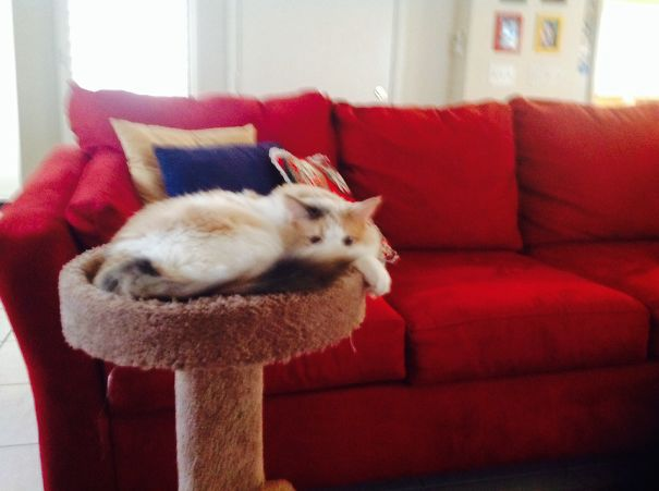This Is My Cat Skye
