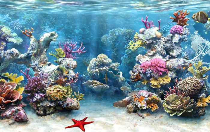 Amazing Photos Of Beautiful Coral Reefs (20+ Pics)