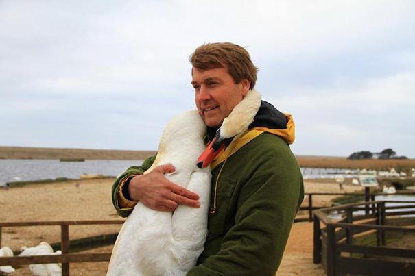 Muž zachránil labuť, tá sa mu odvďačila vrelým objatím