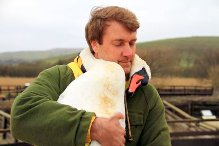 Swan Hugs The Man Who Rescued It By Wrapping Her Neck Around Him