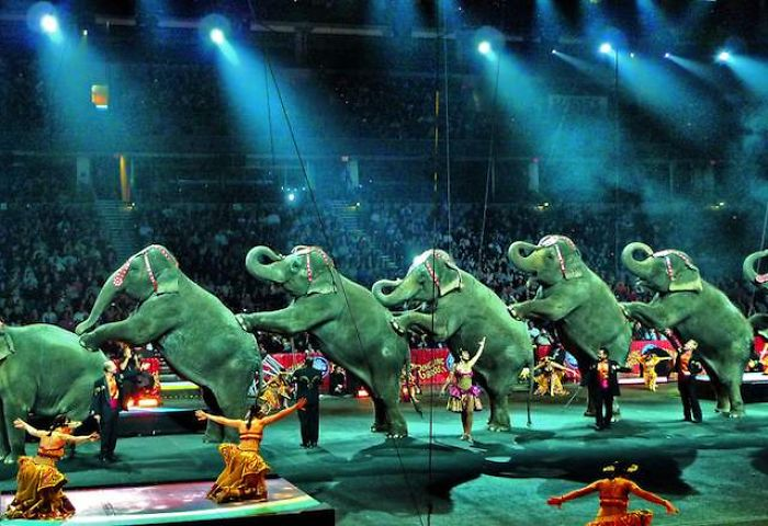 Iran Becomes 9th Country To Ban Use Of Wild Animals In Circuses