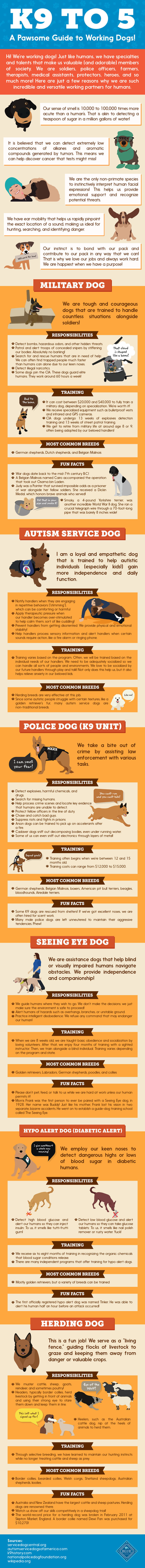 K9 To 5: A Pawsome Guide To Working Dogs!