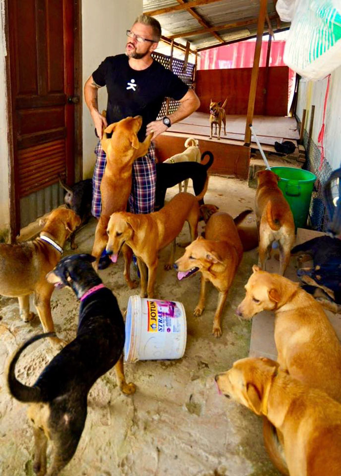 man-feeds-80-homeless-dogs-michael-baines-thailand-13