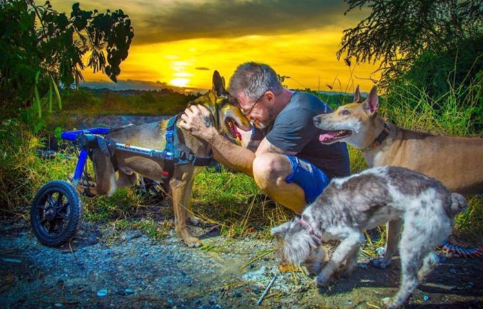 man-feeds-80-homeless-dogs-michael-baines-thailand-41
