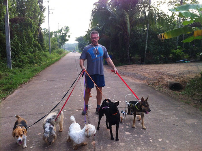 man-feeds-80-homeless-dogs-michael-baines-thailand-5