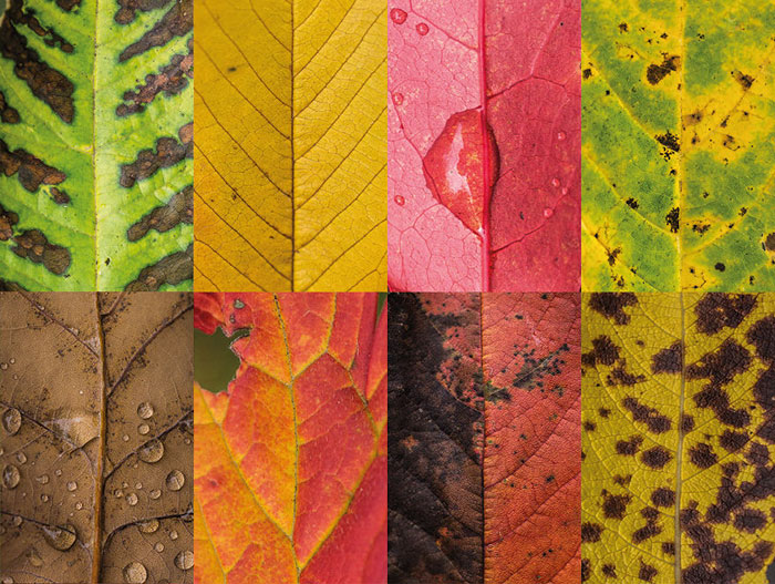 I Photographed Hundreds Of Leaves To Show The Beauty Of Diversity And Imperfection