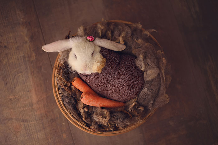 Newborn Session… With A Bunny!