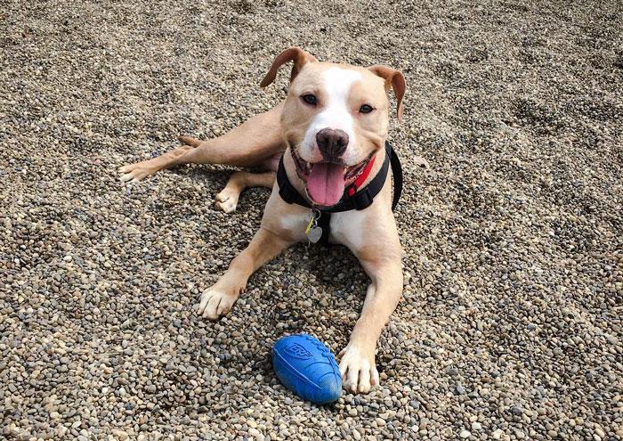 nfl-player-adopts-pit-bull-smiling-dog-selfie-declan-terrell-watson-3