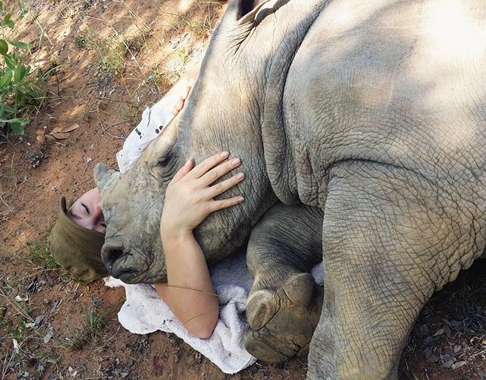 orphan-baby-rhino-sleeps-with-human-kabelo-laure-ellison-orphanage-12