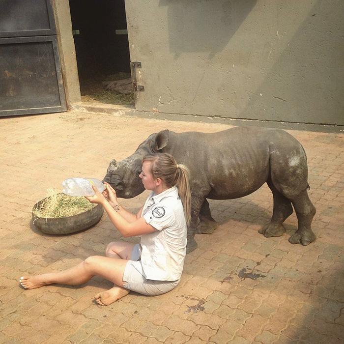 orphan-baby-rhino-sleeps-with-human-kabelo-laure-ellison-orphanage -9