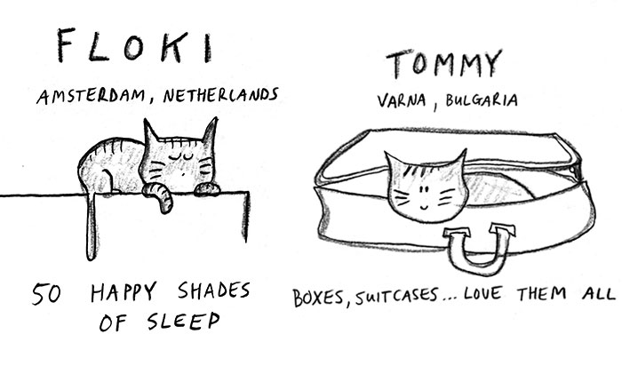 We Draw Cute Illustrations Of People's Cats