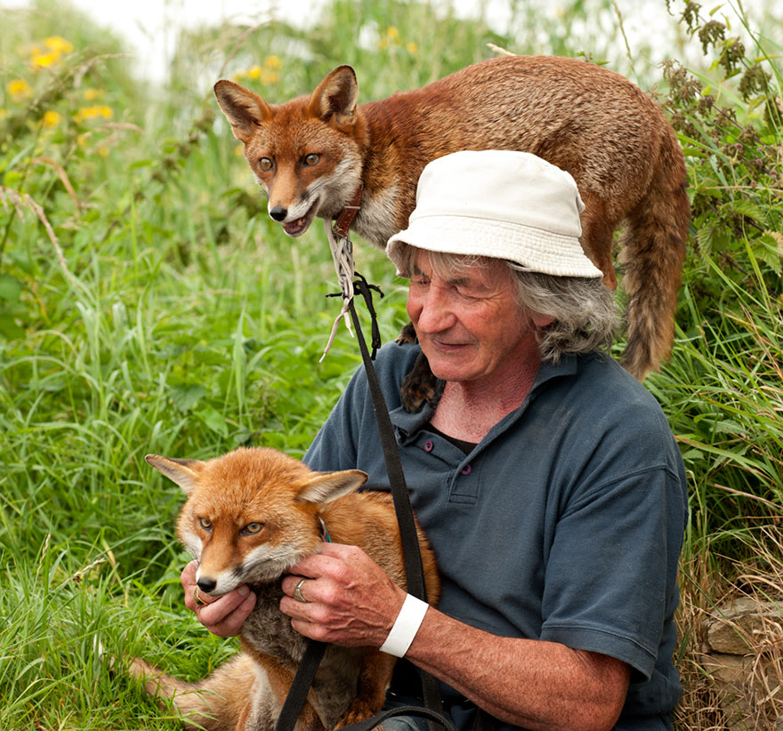 pet-foxes-rescue-patsy-gibbons-ireland-13