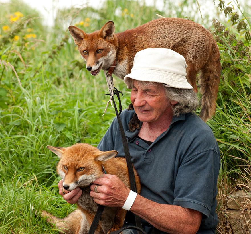 pet-renards de sauvetage-patsy-gibbons-ireland-13