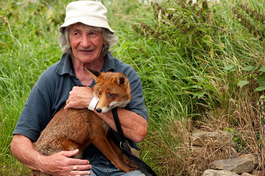 pet-renards de sauvetage-patsy-gibbons-ireland-23