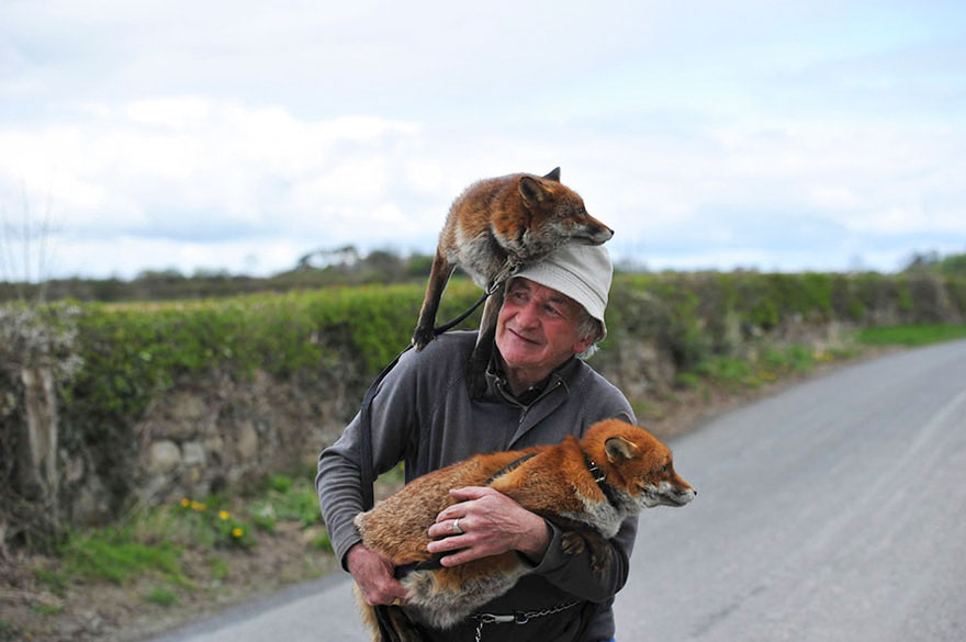 pet-foxes-rescue-patsy-gibbons-ireland-26
