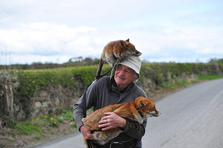 pet-renards de sauvetage-patsy-gibbons-ireland-26