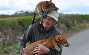 This Man Rescued These Foxes And Now They Won't Leave His Side