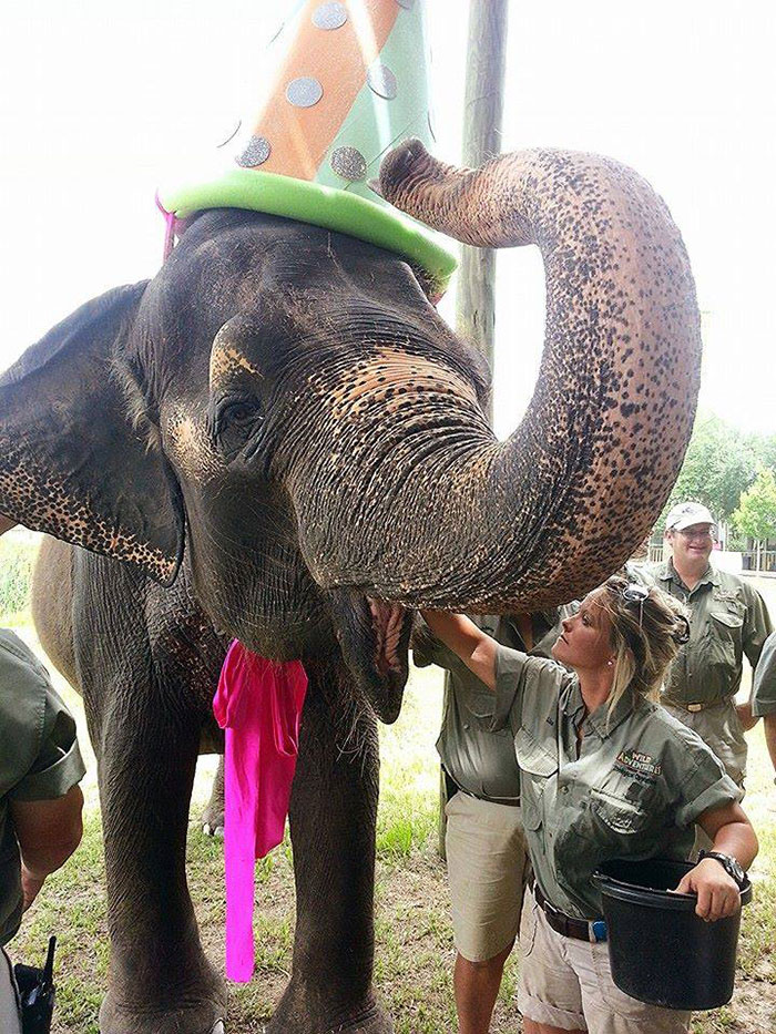 An Elephant In A Party Hat