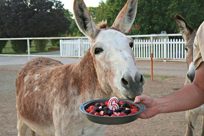 Animal Celebrating Birthday