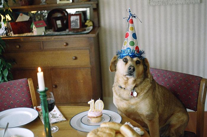 The Dog Turns 10