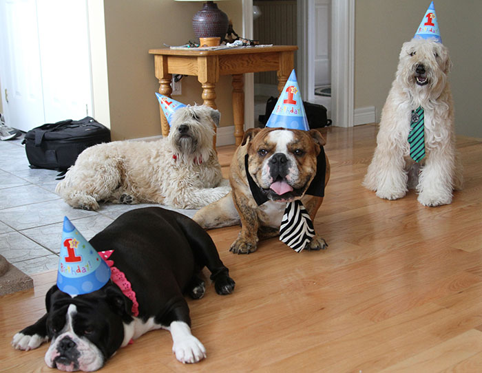 Chester, Finnegan, Lyla And Tony All In Their Birthday Hats