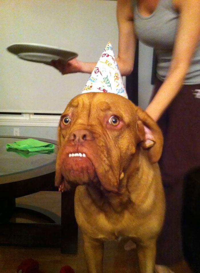 My Friend's Dog On His Birthday
