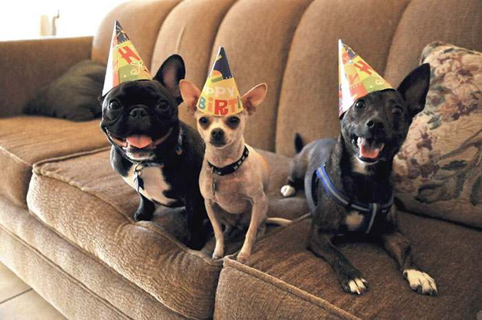 Ain't No Party Like A Doggy Party!