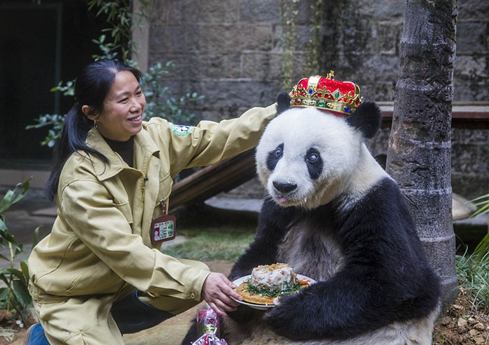 Basi, The World's Second-oldest Panda Is Treated Like A Queen On Her Birthday