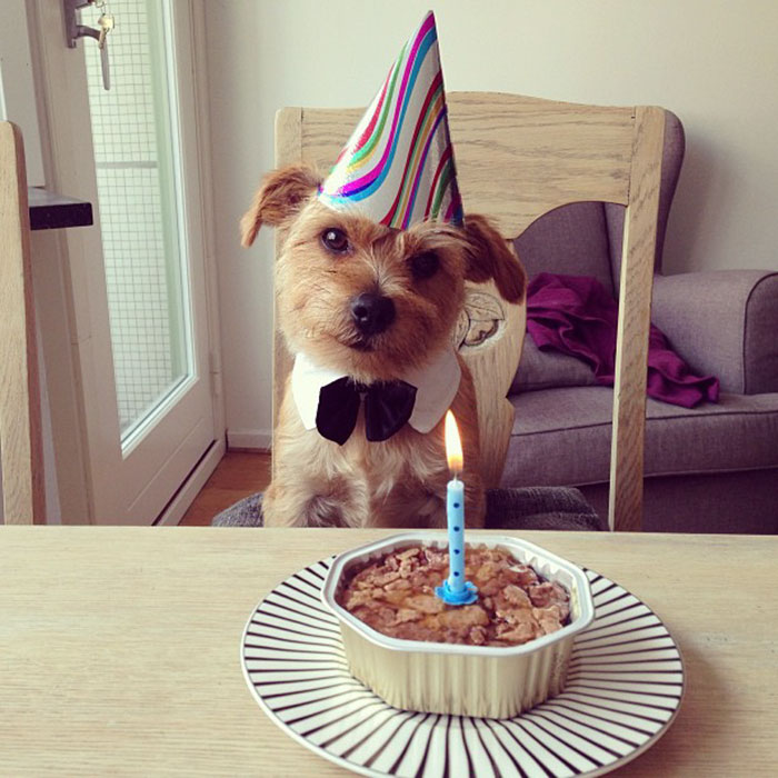 Our Puppy's First Birthday