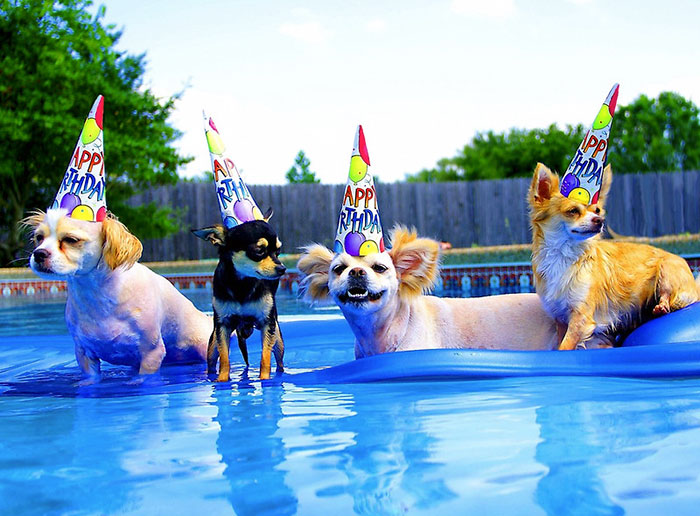 Pool Birthday Party Dogs