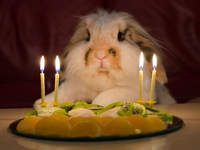 Poipoi's Fourth Birthday