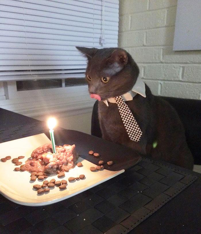 My Cat Nimbus, Celebrating His Birthday Like A Gentleman