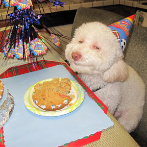 20 Pets Having Better Birthday Parties Than You
