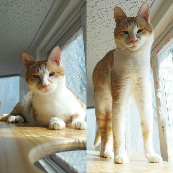 Pero - Nabiya Cat Shelter,seoul