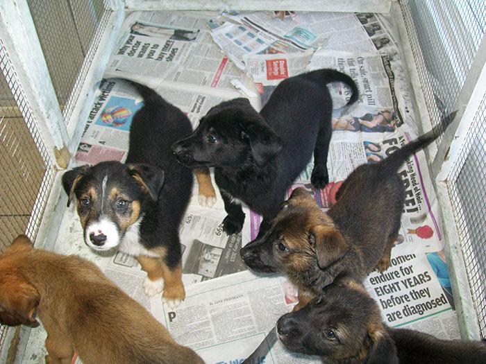rescue-dog-island-potcake-place-turks-and-caicos-1