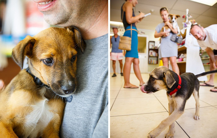 rescue-dog-island-potcake-place-turks-and-caicos-13