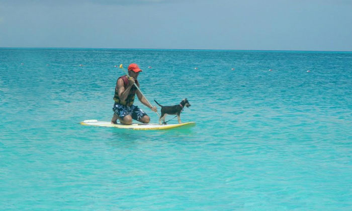 rescue-dog-island-potcake-place-turks-and-caicos-15