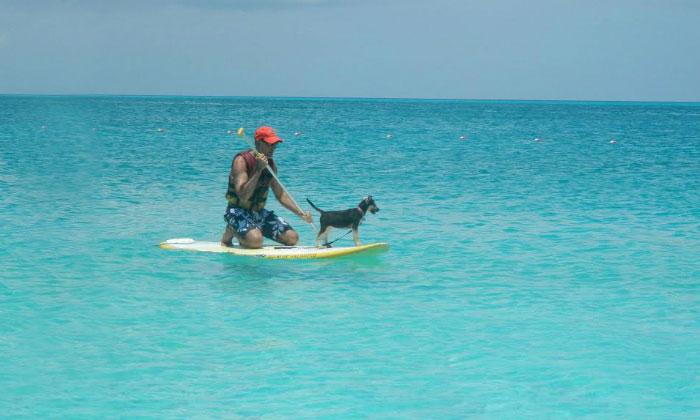 rescue-dog-island-potcake-place-turks-and-caicos-15