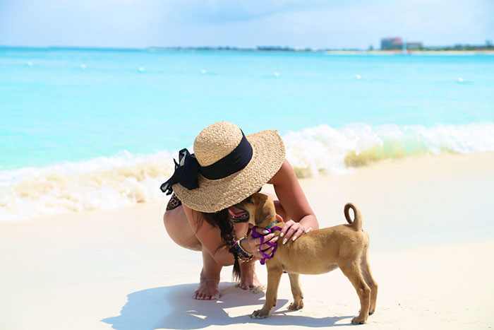 rescue-dog-island-potcake-place-turks-and-caicos-19