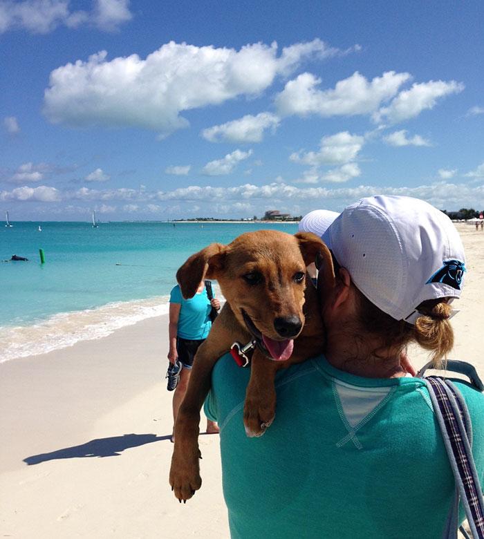 rescue-dog-island-potcake-place-turks-and-caicos-24