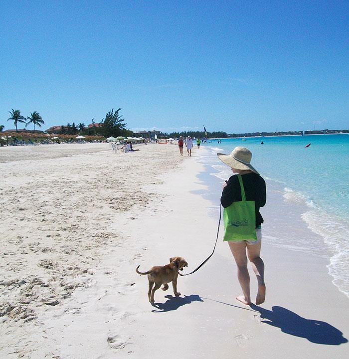 rescue-dog-island-potcake-place-turks-and-caicos-4