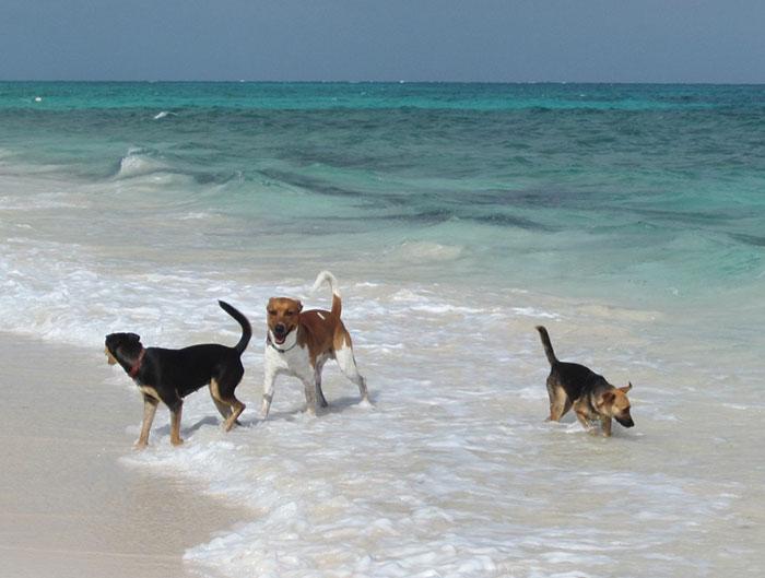 rescue-dog-island-potcake-place-turks-and-caicos-5