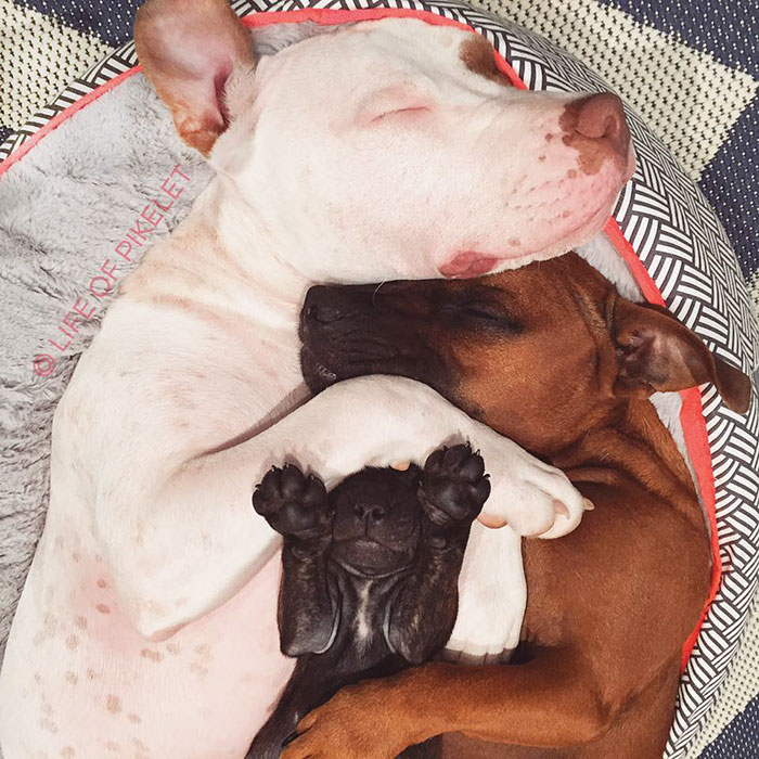 rescue-dogs-new-puppy-best-friends-potato-life-of-pikelet-a20