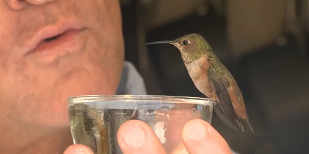 rescue-hummingbird-dog-friendship-rex-hummer-3