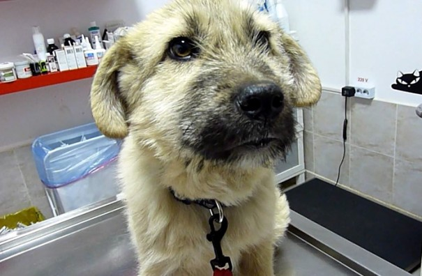 Stray Puppy Shakes Rescuer's Hand After He Saves His Life