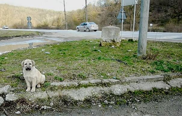 rescue-stray-puppy-gives-handshake-fran-howl-of-dog-adoption-5