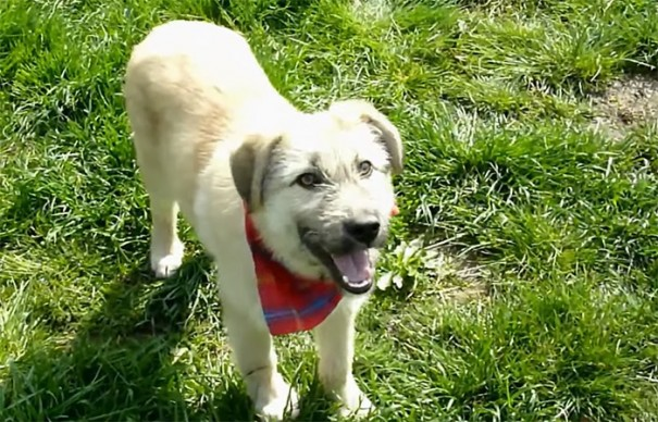rescue-stray-puppy-gives-handshake-fran-howl-of-dog-adoption-6