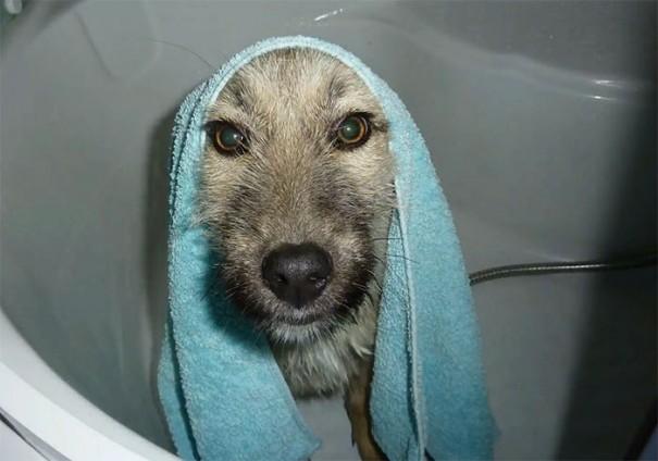 rescue-stray-puppy-gives-handshake-fran-howl-of-dog-adoption-8