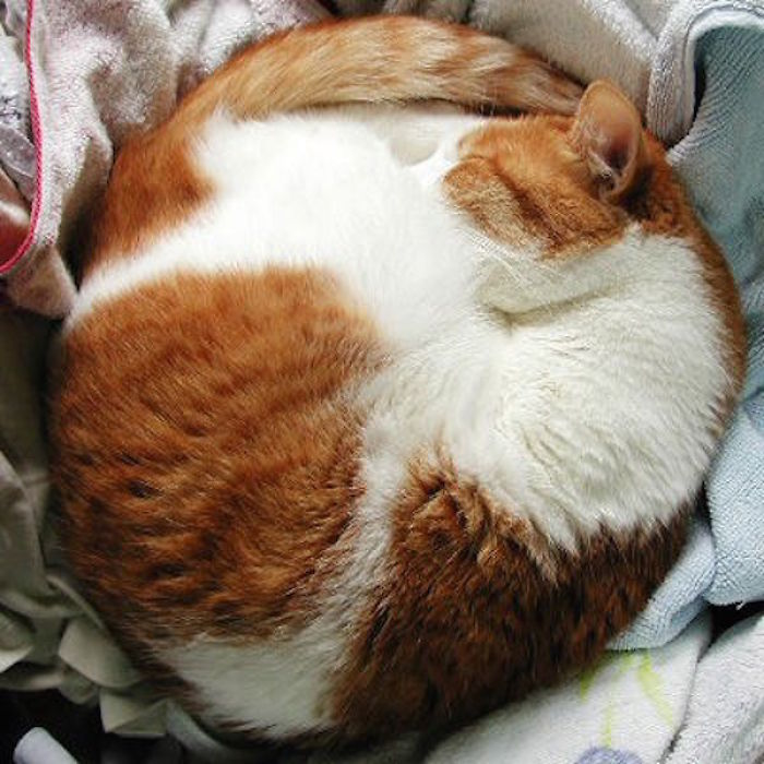 A Collection Of Perfectly Round Cats