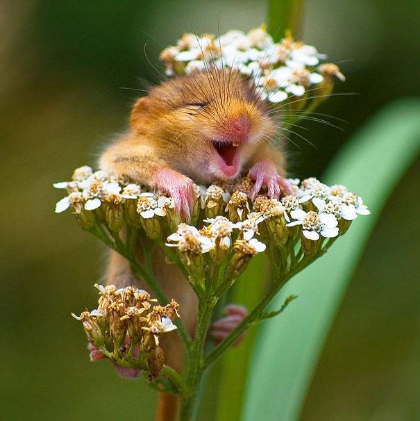 Happy Mice